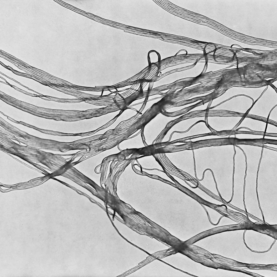 Photogramme nouilles de riz représentant des nanotubes de carbone